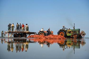 گروهی از صیادان تنها وظیفه جمع آوری تور هارا از دریا دارند تا گروه بعدی بتواند به راحتی ماهی هارا جمع اوری کند