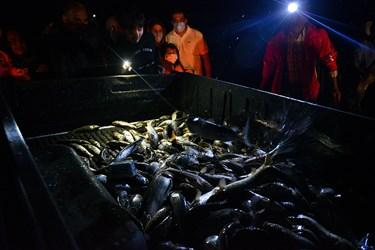 رسمان در تمامی مراحل صید و حتی انتقال ماهی ها نقش موثری دارد و باید به تمامی کار ها نظارت دقیق داشته باشد