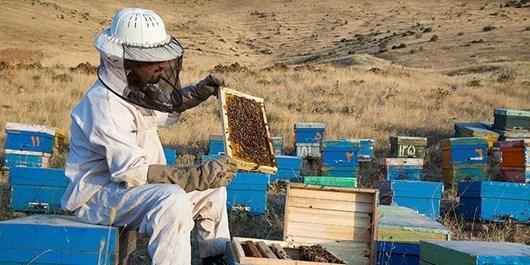 اشتغالزایی ۱۰۰۰ نفره زنبورستانهای خراسانجنوبی | تولید عسل ۲ برابر شد