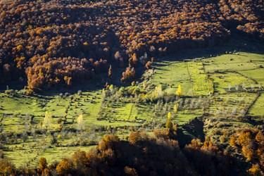 پیش از آنکه پاییز به جنگلهای میانبند و پایینبند برسد، جنگلهای کوهستانی بالابند، رنگ پاییزی به خود می گیرند.