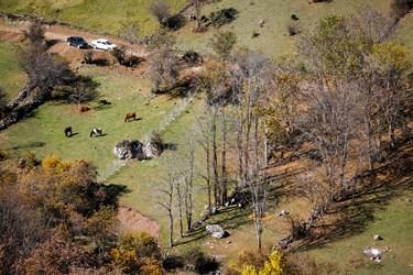 جذابیت پاییزی جنگل بالابند باعث حضور گردشگران در این منطقه میشود