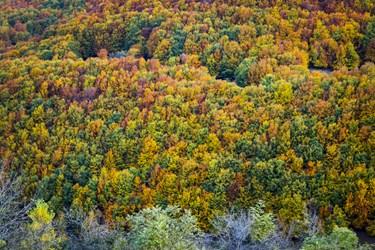 پاييز جنگلهای كوهستانی