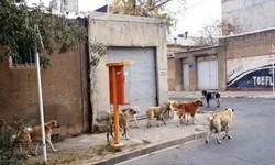 سگ گردانی ممنوع، سگ گردی مجاز!!