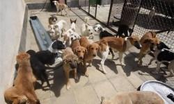 ساماندهی وضعیت سگهای بدون صاحب در اهواز