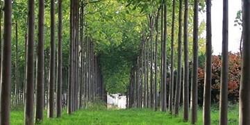 برنامه ریزی برای اجرای زراعت چوب در سطح 1100 هکتار در آذربایجان شرقی