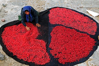 بهشت یاقوتهای قرمز