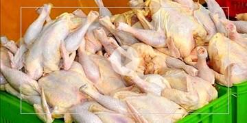 صنعت مرغداری کشور و استان بیتاثیر از بیماری کرونا نیست