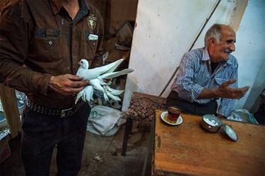 بازار  پرندههای زینتی گجیل