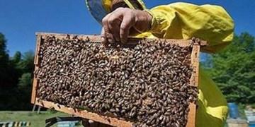 عسل کهگیلویه و بویراحمد؛ از برند سازی تا نبود صنایع مجهز/ مشکلات پیشروی  صادرات عسل چیست؟