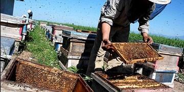 «جهش تولید» به سبک زنبورداران سربیشه | تولید سالانه بیش از۱۰ هزار کیلو عسل