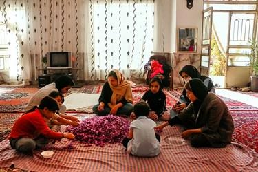 یک دورهمی صمیمانه برای جداسازی کلاله از گل زعفران که علاوه بر سرگرمی، اشتغال به کار موقت و منبع درآمدی برای خانوارهای روستایی است.