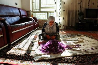 زنی موسپید کرده که به اندازه بغچه پر از گل های زعفرانش، کاشت و برداشت این محصول ارزشمند را به چشم دیده است.