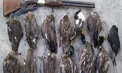 فارس من  محدود شدن فعالیت بازار پرندگان فریدونکنار / غیر قانونی  بودن شکار