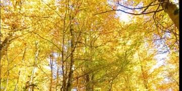 ویدئو کلیپ| جلوه  پاییز در منطقه «سنگده»