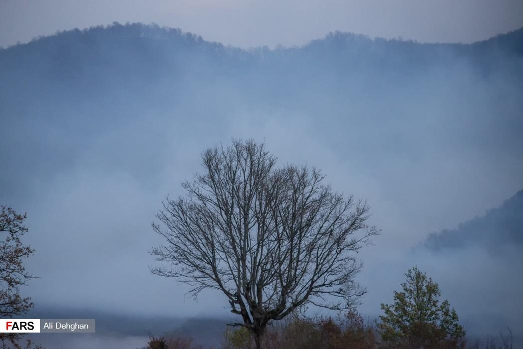 دود ناشی از حریق جنگل