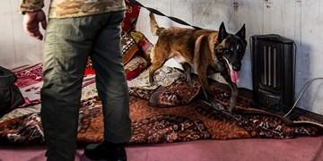کشف مواد مخدر با سگ موادیاب