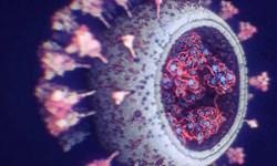 جدیدترین و دقیقترین تصاویر از ویروس کرونا منتشر شد