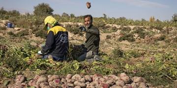 کلیپ| حمایت جهاد کشاورزی لرستان از کاشت چغندر به جای برنج