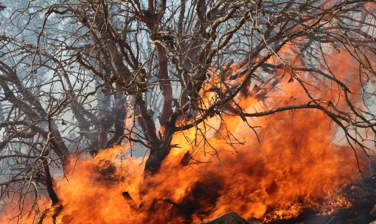13990820001009 Test NewPhotoFree - درختان توسکستان در فقدان تجهیزات خاکستر شدند؟