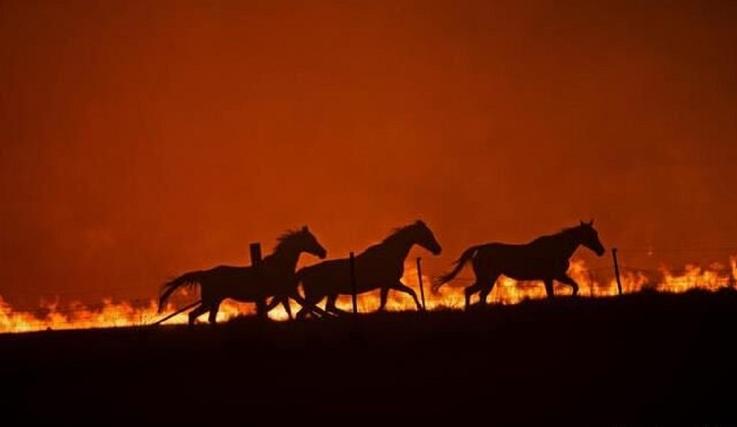 13990820001013 Test NewPhotoFree - درختان توسکستان در فقدان تجهیزات خاکستر شدند؟