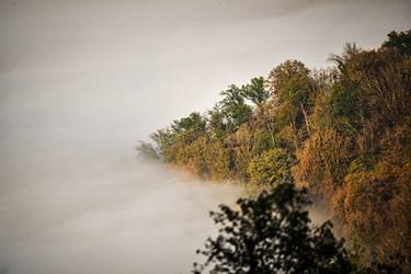 طبیعیت جنگل ابر فیلبند آمل