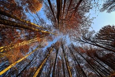 درختان به دلیل قرار گرفتن در نقاط و عرض جغرافیایی متفاوت با چهار فصل روبرو میشوند تا در هر فصل لباس مخصوص خود را به تن کنند