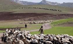 اجرای طرح بینیازی از واردات گوشت قرمز با کمک عشایر/ پشتیبانی امنیتی بسیج از مسیر کوچ