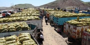 فاجعههای صادراتی بهدلیل سوءمدیریت و نوسان ارزی/ ۱۱۰۰کامیون سیبزمینی مانند ۱۰۰۰ تن گوجه در مرز فاسد میشود؟