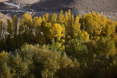 خزان در پارک ائل گلی تبریز
