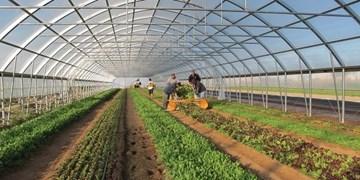 گازرسانی به گلخانههای کشاورزی رودان/ گاز به درب خانههای رودان در اکثر محلات رسیده است