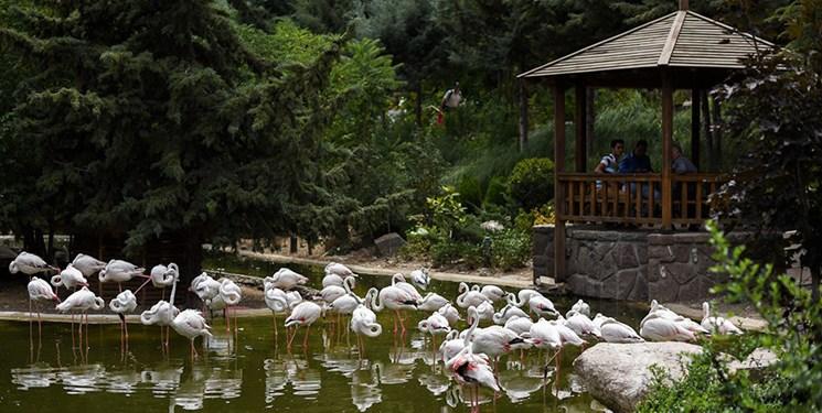 هزینه 30 میلیارد تومانی شهرداری قم در باغ پرندگان