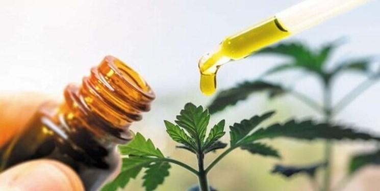 واقعیتهای درمان گیاهی کرونا/فرایند تولید داروهای گیاهیِ مجوزگرفته، علمی است
