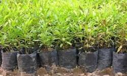 کاشت و حفاظت از 620 اصله نهال در سوادکوه