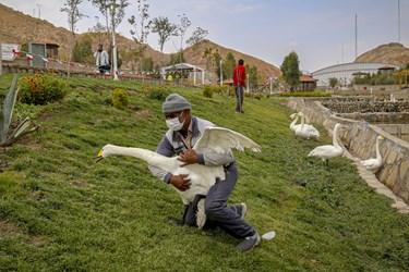 افتتاح باغ پرندگان در قم
