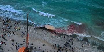 پیدا شدن لاشه نهنگ گرمسیری در سواحل کیش