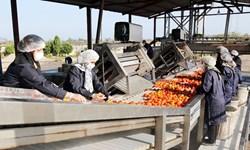 راهاندازی اولین اورژانس محصولات کشاورزی به همت بنیاد برکت در کردستان