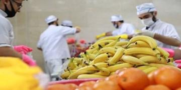 توزیع ۴۶۰ بسته میوه بین بیماران کرونایی در نهاوند