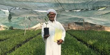 ۷۰ هزار اصله نونهال حرا در قشم تولید شد