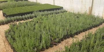 فیروزآباد؛ قطب گیاهان دارویی فارس/ گنجینههای ژنتیکی که مغفول میمانند