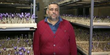 کشت زعفران گلخانهای شهروند گنبدی/ تولید عسل طبیعی در محیط شهری گنبد + تصاویر