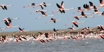 آلودگی پرندگان تالاب میل مغان به آنفلوآنزا/ اهالی از نزدیک شدن به تالاب خودداری نمایند