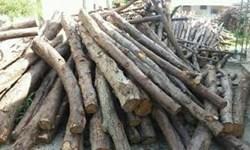 فیلم   قطع درختان در بلوار دشت بهشت محمدشهر