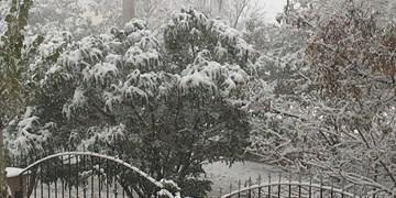 مراغه با  39 میلیمتر رکورددار بیشترین بارش برف در آذربایجانشرقی