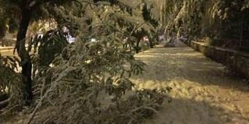 بارش برف و خسارات وارده به درختان/ شکستن درختان باعث قطعی برق در اردبیل شد
