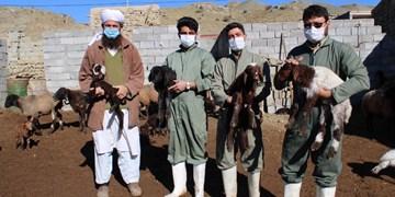 فیلم   وقتی اصلاح نژاد دام در خراسان شمالی به بار مینشیند