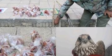 انهدام چهار گروه صیاد حرفهای پرندگان شکاری در خراسان رضوی