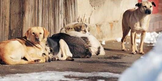 فارس من| جمعآوری ۷۰۰ قلاده از سگهای ولگرد در شهر صدرا
