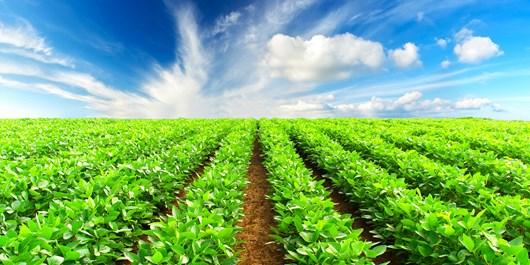 ۴۵ هزار هکتار اراضی ملی کشور به شهرکهای کشاورزی اختصاص یافت