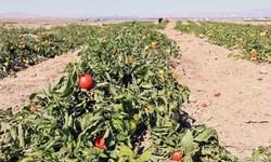 رشد 80 درصدی صدور پروانههای حد مجاز آلاینده محصولات کشاورزی در ایلام