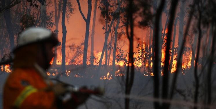 فیلم  هزاران هکتار در استرالیا طعمه آتش شدند